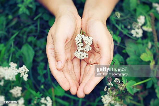 Flowers in your hands