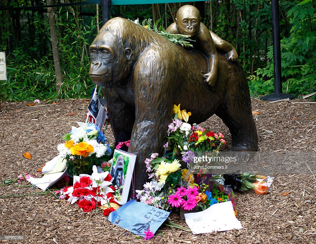 Flowers lay around a bronze statue of a gorilla and her baby outside the Cincinnati Zoo's Gorilla World exhibit days after a 3-year-old boy fell into the moat and officials were forced to kill Harambe, a 17-year-old Western lowland silverback gorilla June 2, 2016 in Cincinnati, Ohio. The exhibit is still closed as Zoo official work to up grade safety features of the exhibit.