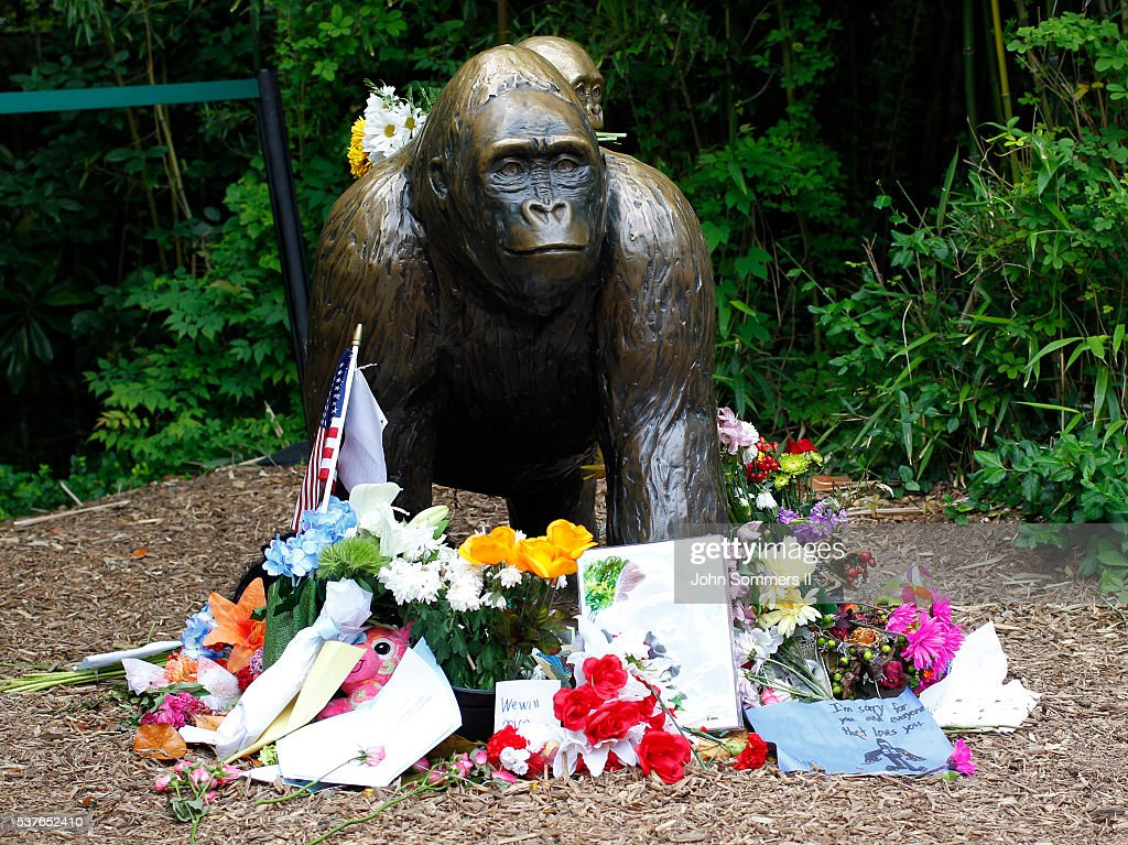 Flowers lay around a bronze statue of a gorilla and her baby outside the Cincinnati Zoo's Gorilla World exhibit days after a 3-year-old boy fell into the moat and officials were forced to kill Harambe, a 17-year-old Western lowland silverback gorilla June 2, 2016 in Cincinnati, Ohio. The exhibit is still closed as zoo officials work to upgrade safety features of the exhibit.