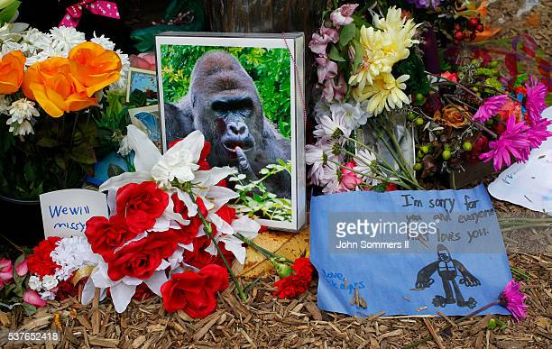 Flowers lay around a bronze statue of a gorilla and her baby outside the Cincinnati Zoo's Gorilla World exhibit days after a 3yearold boy fell into...