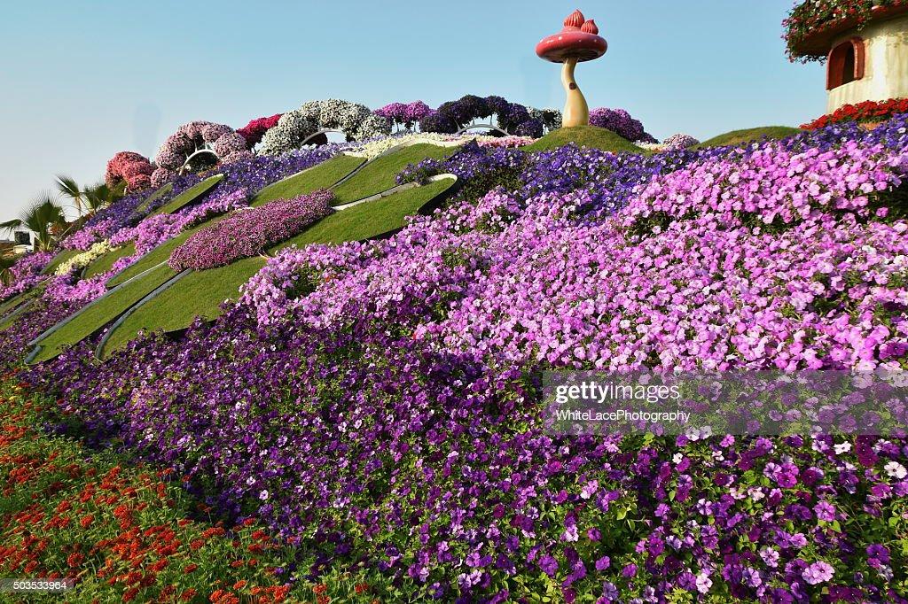 Flowers Matt at the Dubai Miracle garden,Dubai, UAE : Stock Photo