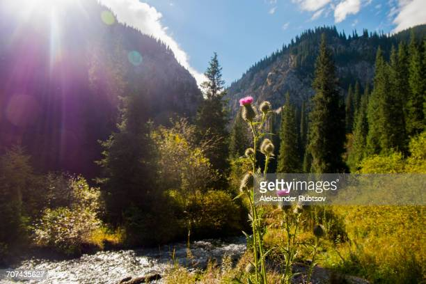 Flowers near mountain stream