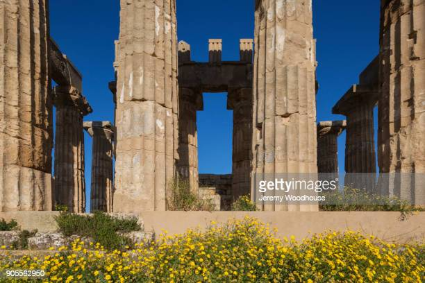 Flowers near pillars at ruins