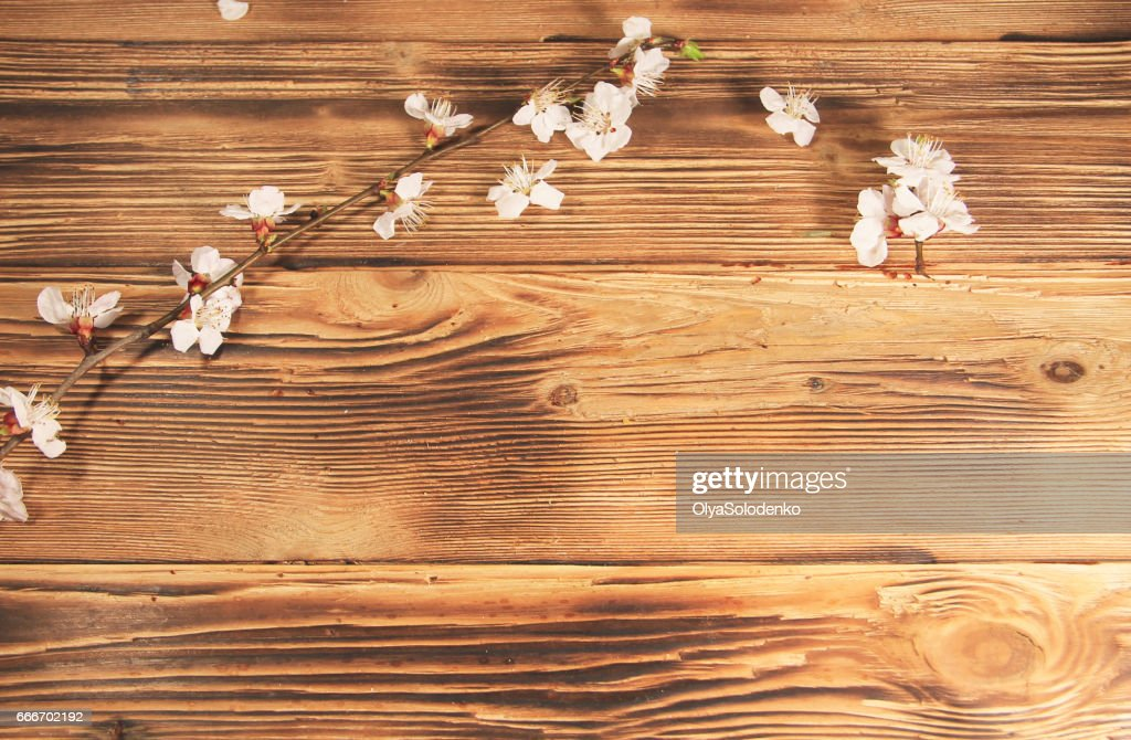 http://www.istockphoto.com/photo/flowers-of-apricot-tree-on-wooden-background-gm666702192-121548179