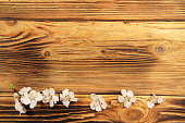 http://www.istockphoto.com/photo/flowers-of-apricot-tree-on-wooden-background-gm666702196-121548181