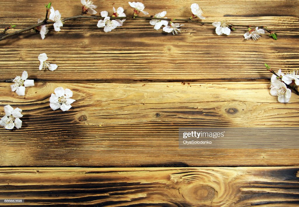 http://www.istockphoto.com/photo/flowers-of-apricot-tree-on-wooden-background-gm666882698-121618133