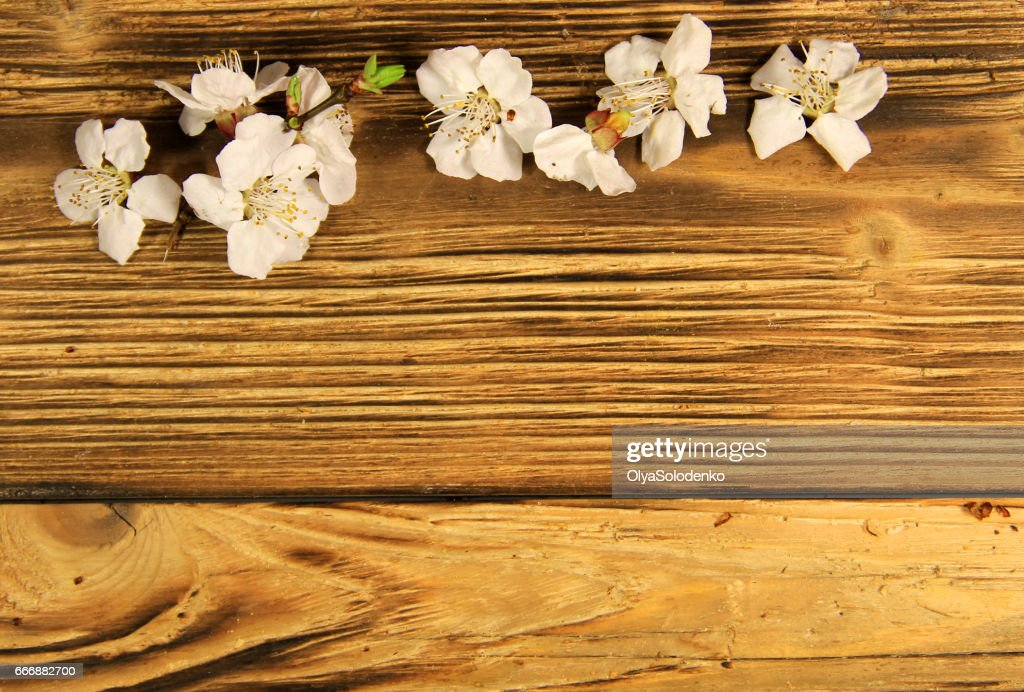 http://www.istockphoto.com/photo/flowers-of-apricot-tree-on-wooden-background-gm666882700-121618131