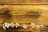 http://www.istockphoto.com/photo/flowers-of-apricot-tree-on-wooden-background-gm829706530-134935017