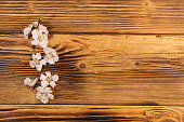 http://www.istockphoto.com/photo/flowers-of-apricot-tree-on-wooden-background-gm829706556-134935019