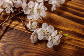 http://www.istockphoto.com/photo/flowers-of-apricot-tree-on-wooden-background-gm949013268-259074441