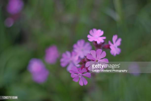 flowers of great britain - love magazine stock pictures, royalty-free photos & images