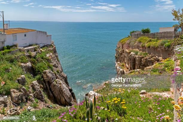 flowers on a cliff and the ocean - estremadura stock-fotos und bilder