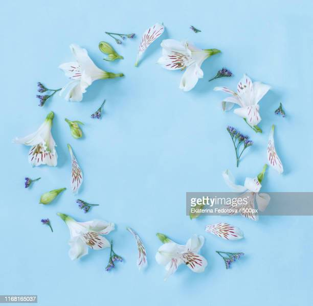 flowers on a light blue background - alstroemeria stock pictures, royalty-free photos & images