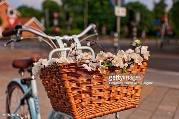 Flowers on bicycle