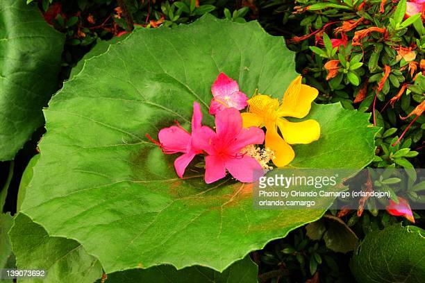 flowers on green leaf - file:the_wyoming,_orlando,_fl.jpg stock pictures, royalty-free photos & images