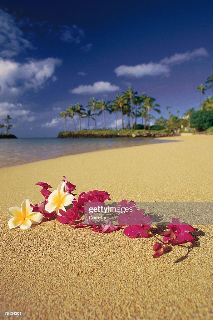 Flowers on Hawaiian beach : Stockfoto