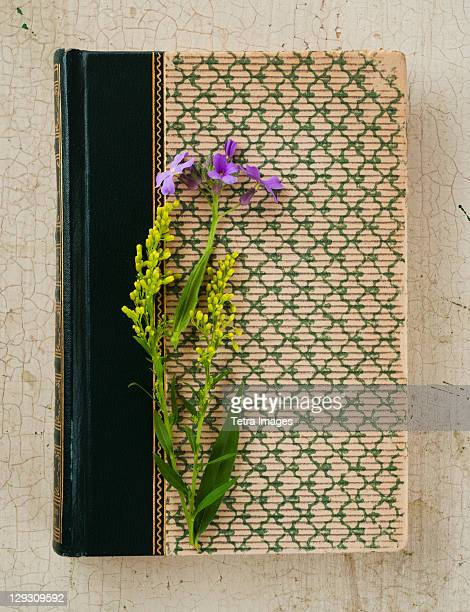 Flowers on old book