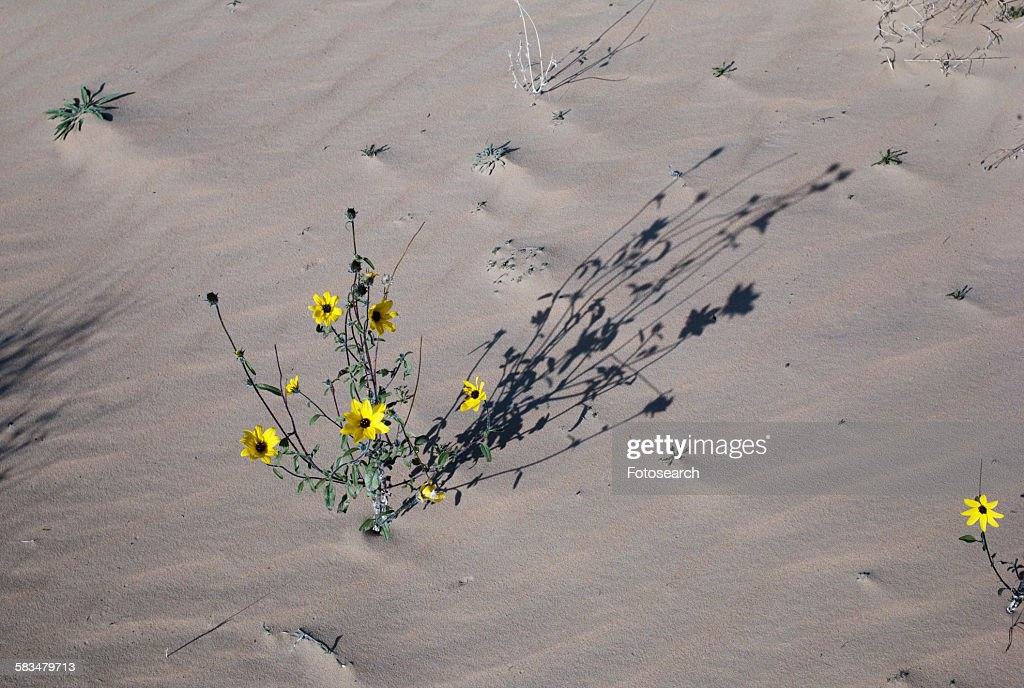 Flowers on plant in a desert : Stock Photo