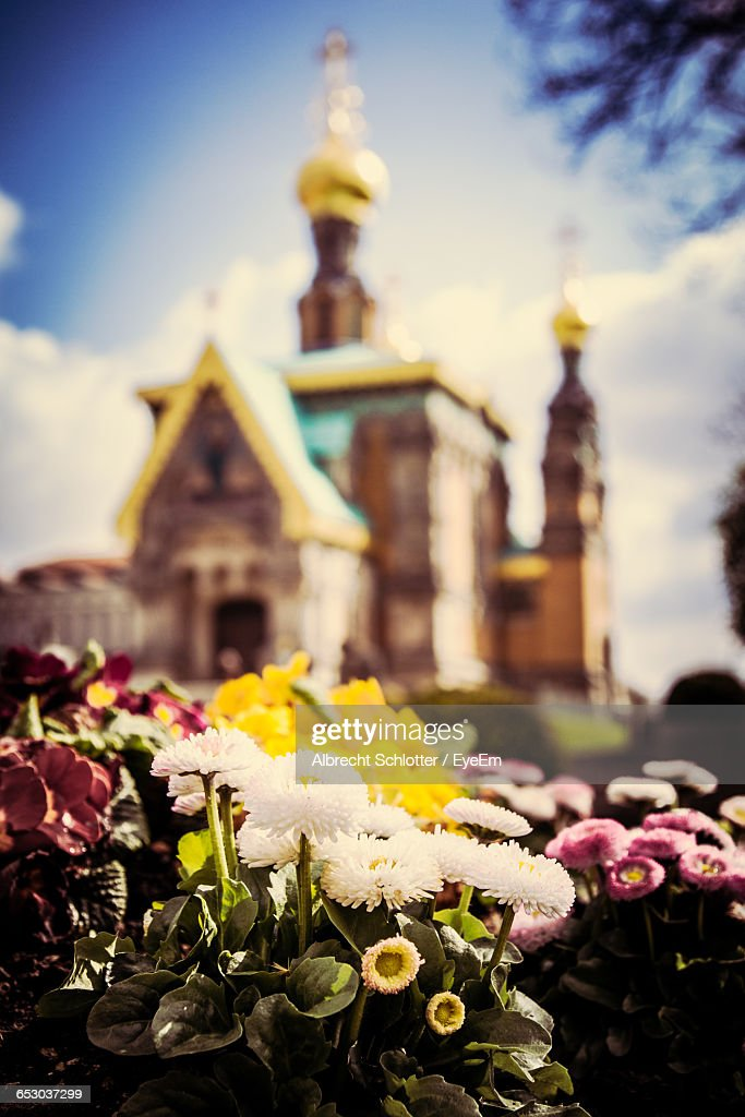 Flowers On Rock Against Russian Chapel Church : Stock-Foto