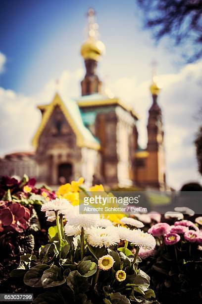 flowers on rock against russian chapel church - albrecht schlotter stock photos and pictures