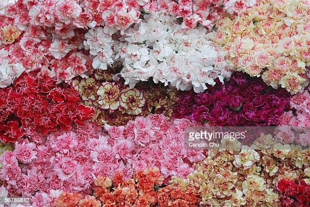 Flowers on sale at the Dounan Flower Market on February 7 2006 in suburban Kunming Yunnan Province China The Dounan Flower Market is the largest in...