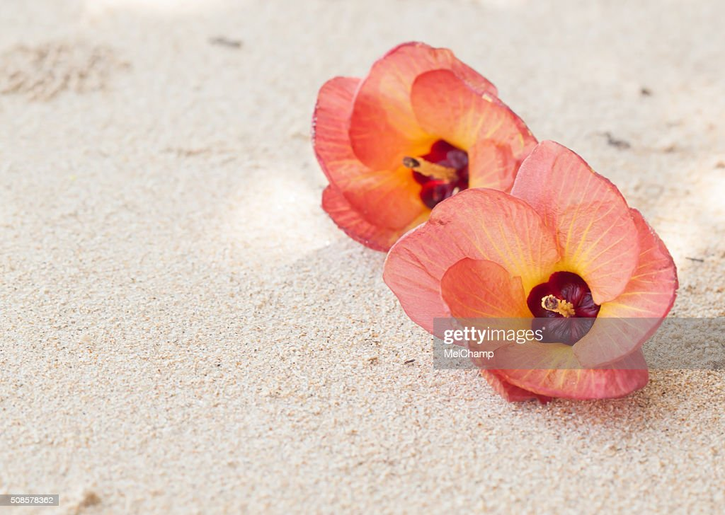 Flowers on the beach : Stock Photo