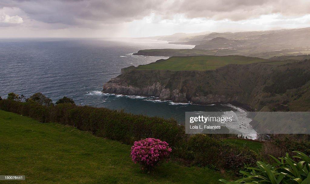 Flowers on the coast : Stock-Foto