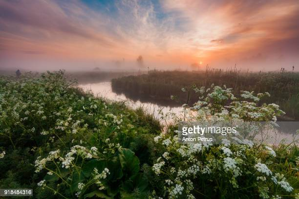 Flowers on the river bank in the misty dawn