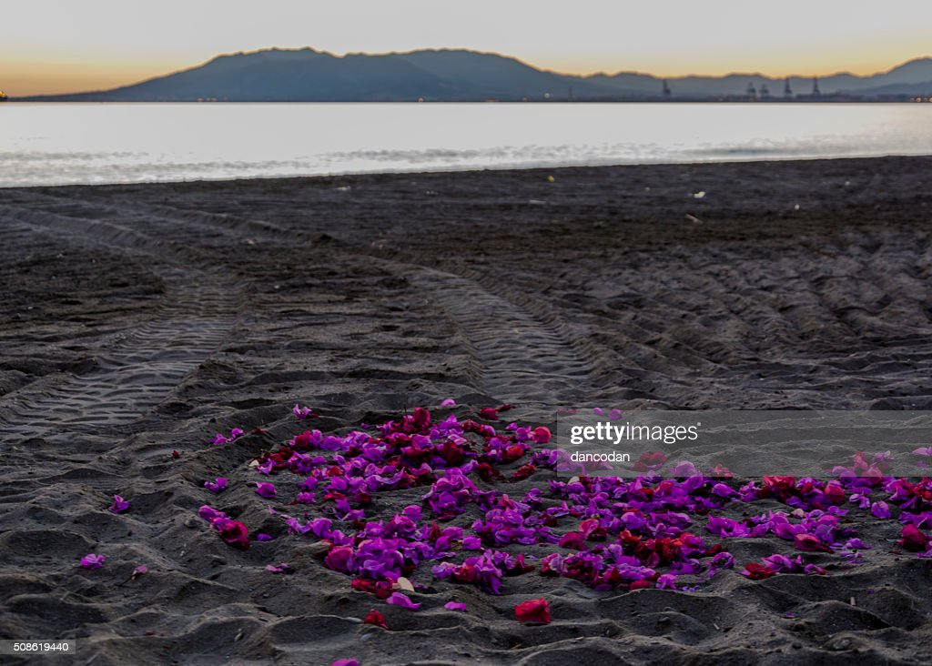 Flores sobre la arena : Stock Photo