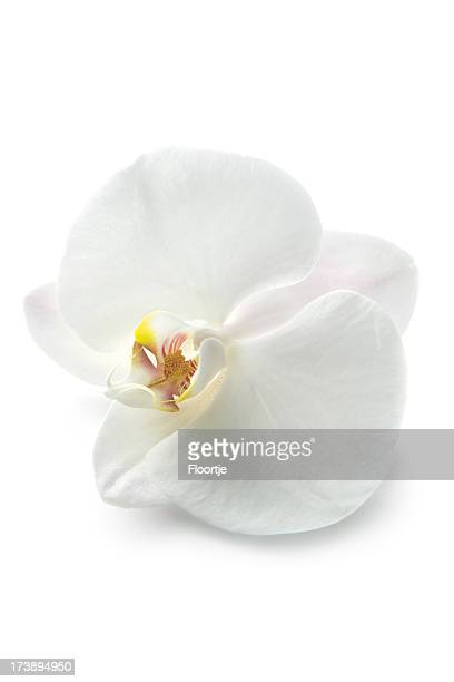 flowers: orchid - orchid flower stock pictures, royalty-free photos & images