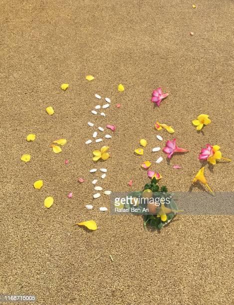flowers parts on the ground - rafael ben ari stock-fotos und bilder