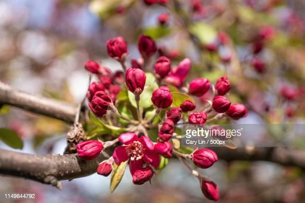 flowers - cary stockfoto's en -beelden