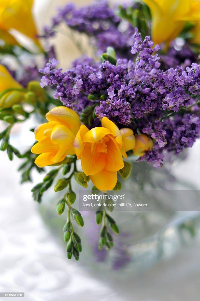 Flowers : Bildbanksbilder