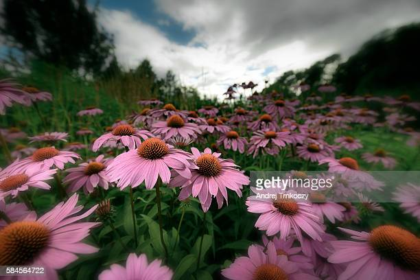 flowers - ljubljana stock pictures, royalty-free photos & images