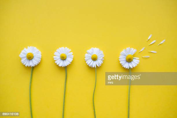 flowers - four objects stock pictures, royalty-free photos & images