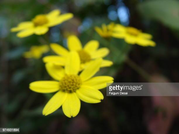 flowers - falguni stock pictures, royalty-free photos & images