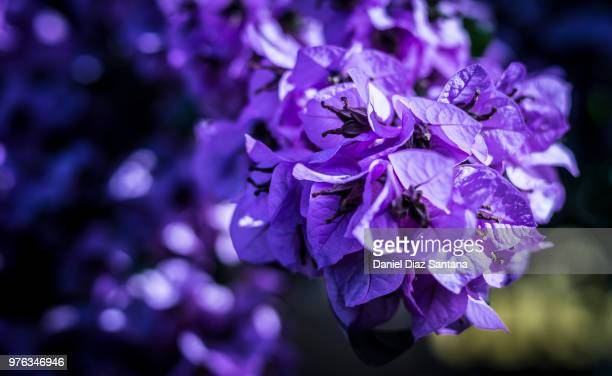 flowers - iris diaz fotografías e imágenes de stock