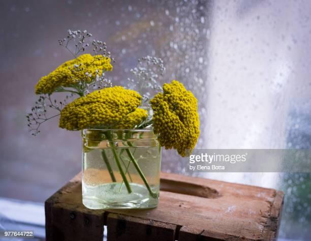 flowers - elena blume stock-fotos und bilder