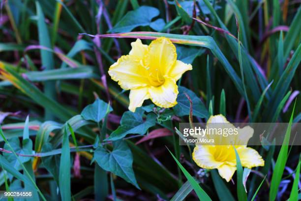 flowers - moura stock photos and pictures