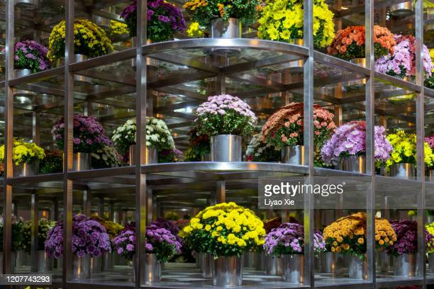 flowers pot in the rack - liyao xie stock pictures, royalty-free photos & images