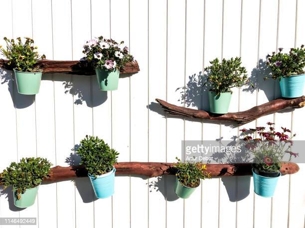 flowers pots hanging in the wall in a beach club of barcelona. - garden decoration stock pictures, royalty-free photos & images