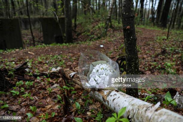 Flowers rest in the woods in Hopkinton, MA on May 4 nearby where Mikayla Miller was found dead in Hopkinton on April 18.