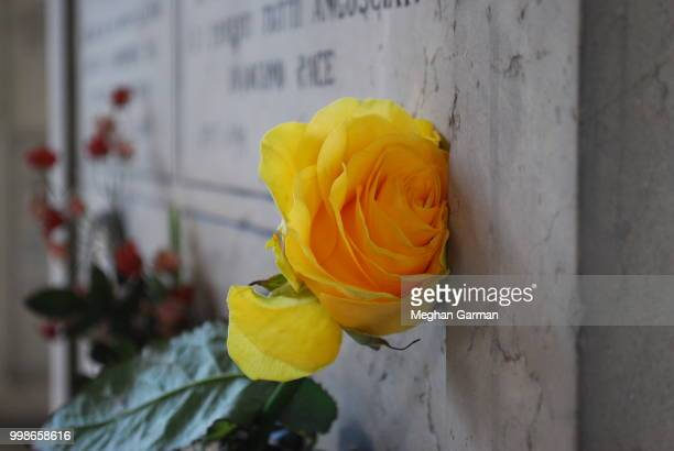flowers resting on a headstone 2 - meghan stock photos and pictures