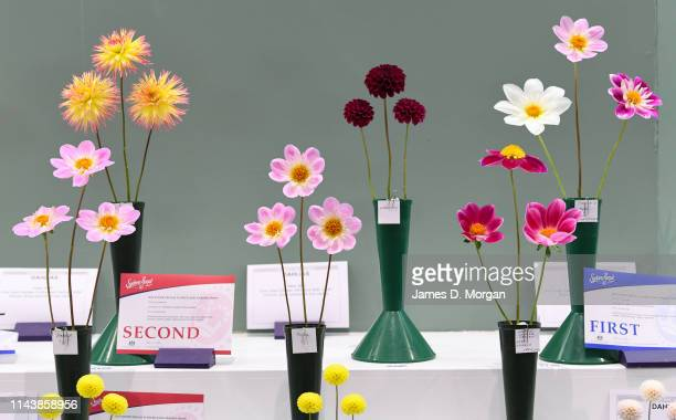 Flowers sit in their vases with their winners certificates after judging during the Sydney Royal Easter Show at Sydney Showground on April 20, 2019...