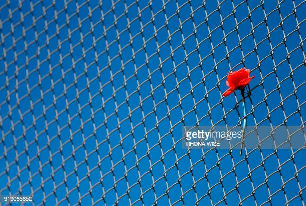 TOPSHOT A flowers sits on a fence near the school on a makeshift memorial for the victims of the Marjory Stoneman Douglas High School shooting in...