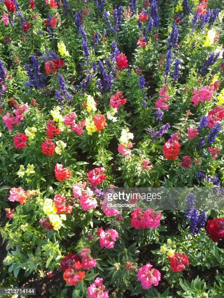 flowers, spring, flowerbed - bluefootage stock pictures, royalty-free photos & images