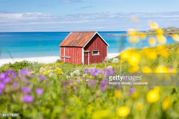 Flowers surrounded by turquoise sea Ramberg