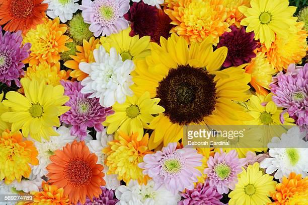 flowers together - サットンコールドフィールド ストックフォトと画像