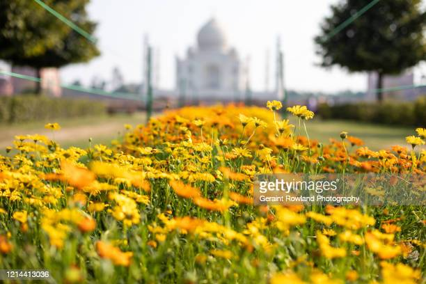 flowers & unesco - celebrity death stock pictures, royalty-free photos & images