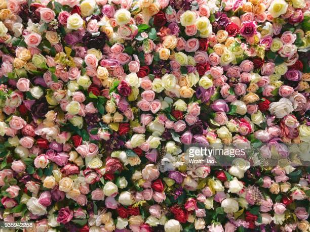 flowers wall indoor - flower wallpaper stock pictures, royalty-free photos & images